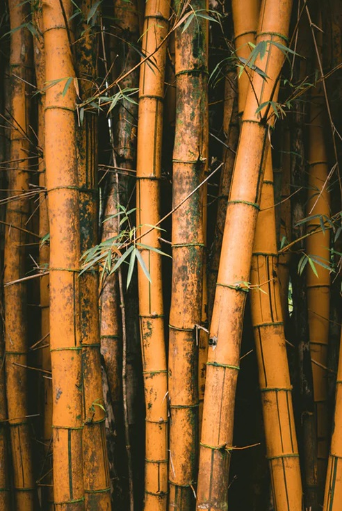 What is Bamboo extract? bamboo tree leaf leaves What is Bamboo extract?