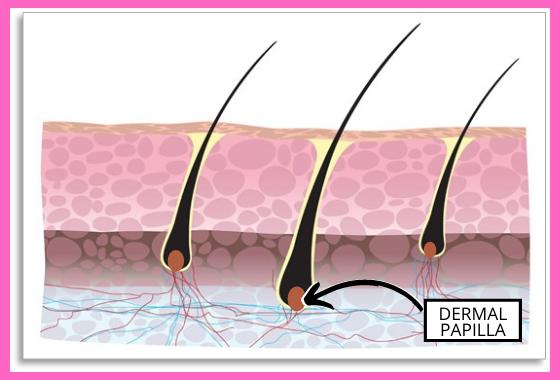 prenatal vitamins in shampoo for hair growth won't reach the Dermal Papilla